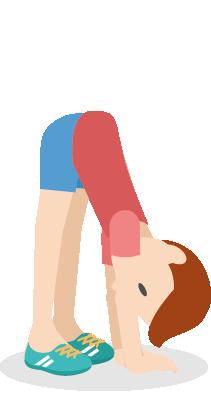 L étirement des muscles ischio-jambier